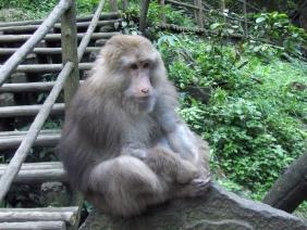 Emei shan monkey
